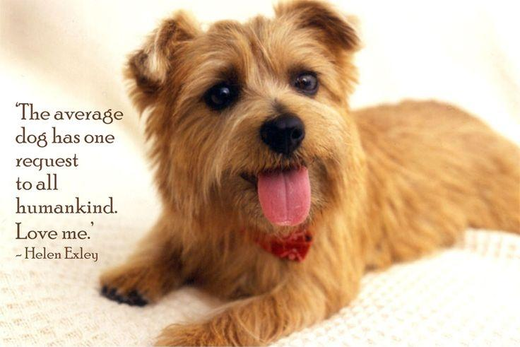 The average dog has one request to all humankind.