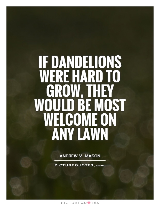 If dandelions were hard to grow, they would be most welcome on any lawn Picture Quote #1