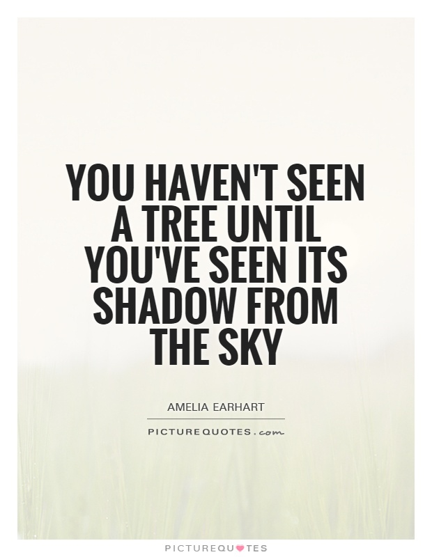 Quotes About Friends You Havent Seen In Awhile : You haven t seen a tree until ve its shadow from the sky picture quotes