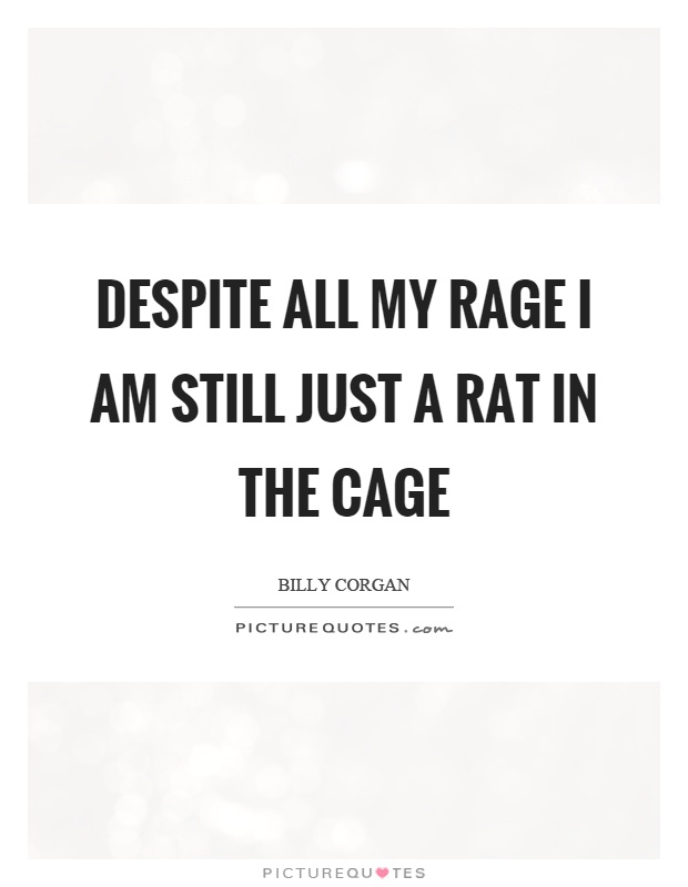 Despite all my rage I am still just a rat in the cage Picture Quote #1
