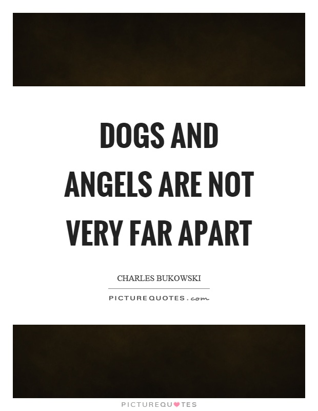 Dogs and angels are not very far apart Picture Quote #1