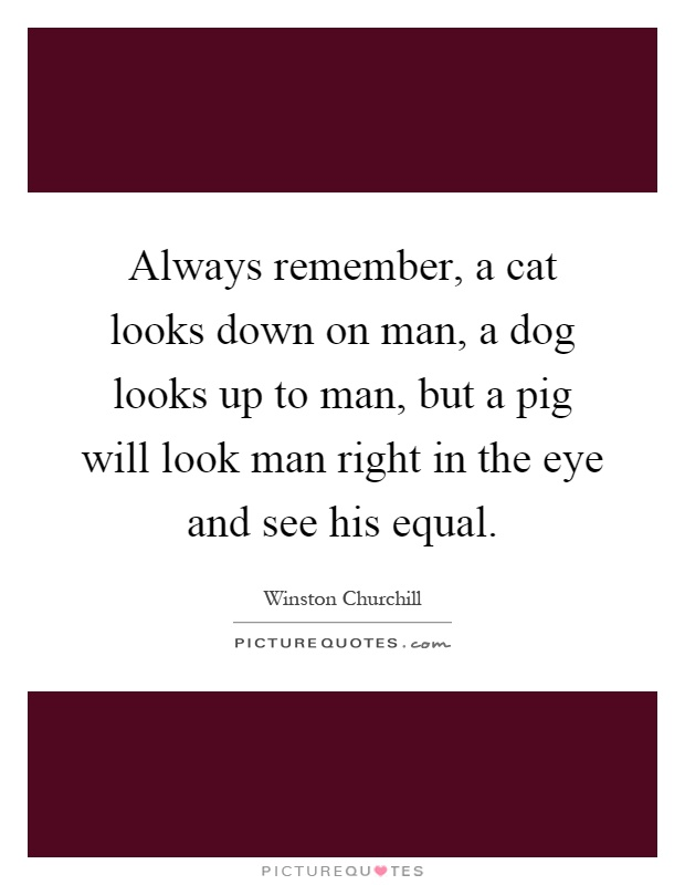 Always remember, a cat looks down on man, a dog looks up to man, but a pig will look man right in the eye and see his equal Picture Quote #1
