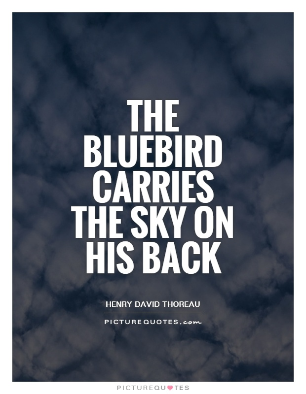 The bluebird carries the sky on his back Picture Quote #1