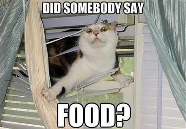 Did somebody say food? Picture Quote #1