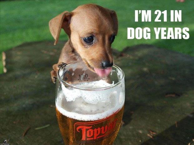 I'm 21 in dog years Picture Quote #1