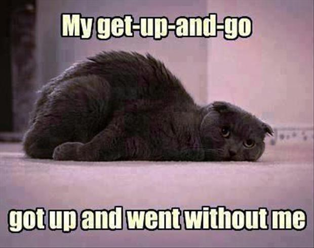My get up and go got up and went without me Picture Quote #1