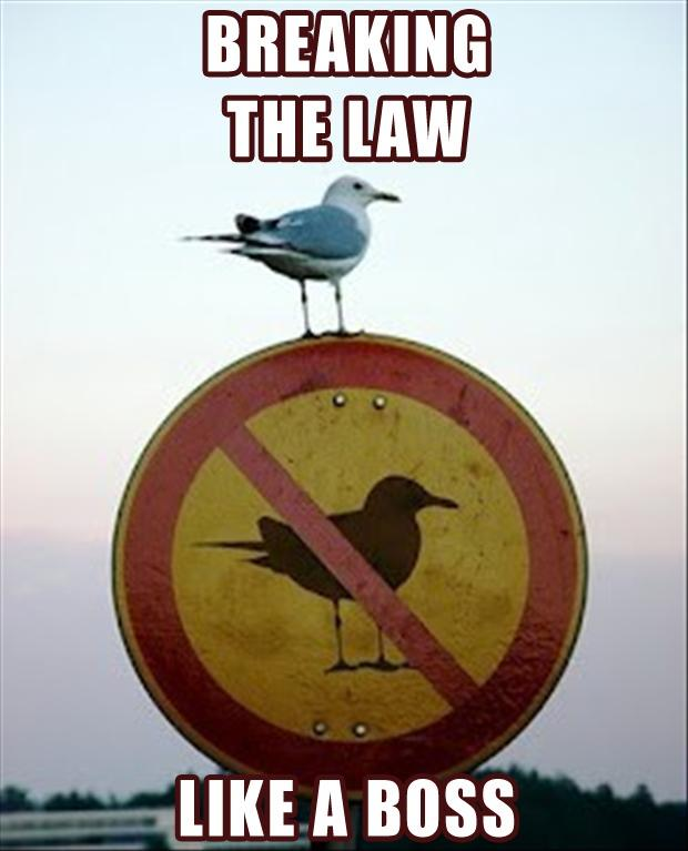 Breaking the law like a boss Picture Quote #1