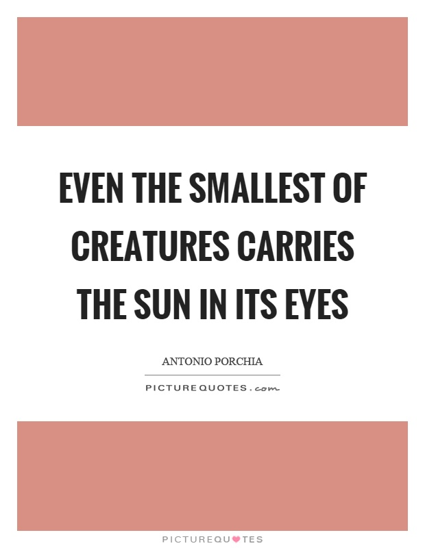 Even the smallest of creatures carries the sun in its eyes Picture Quote #1