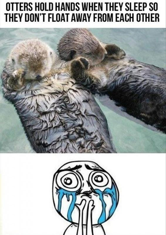 Otters hold hands when they sleep so they don't float away from each other Picture Quote #1