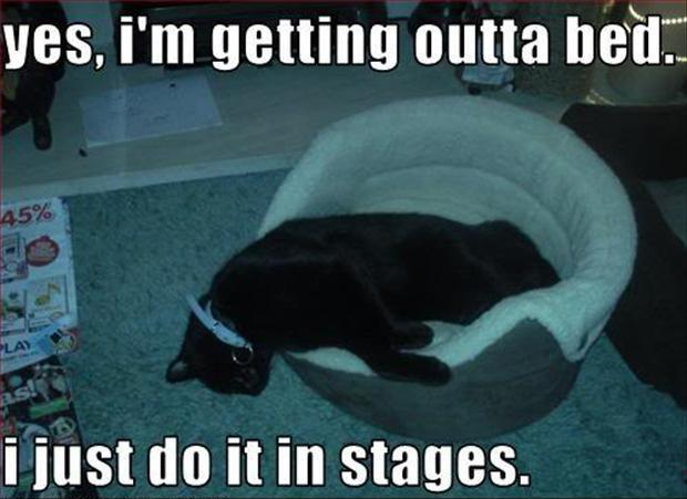 Yes, I'm getting outta bed. I just do it in stages Picture Quote #1