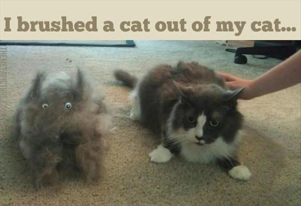 I brushed a cat out of my cat Picture Quote #1