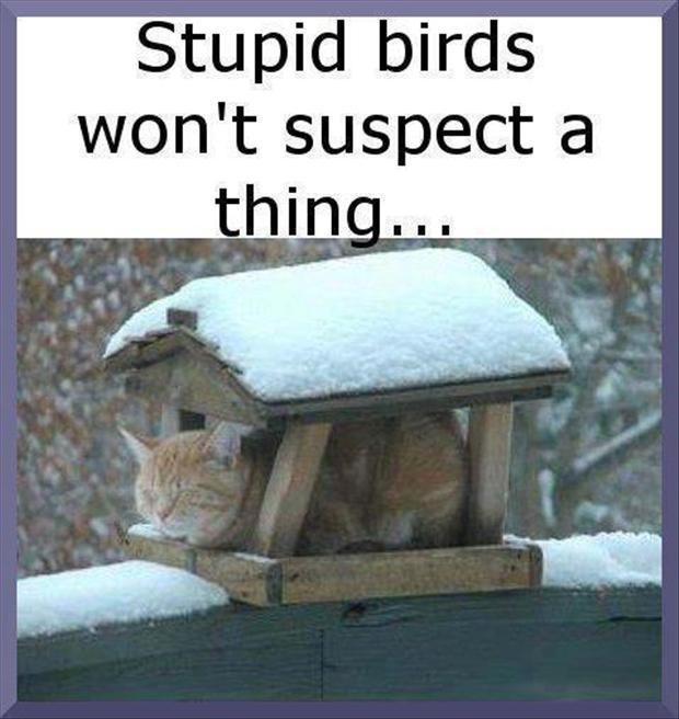 Stupid Picture Quotes: Funny Cat Picture