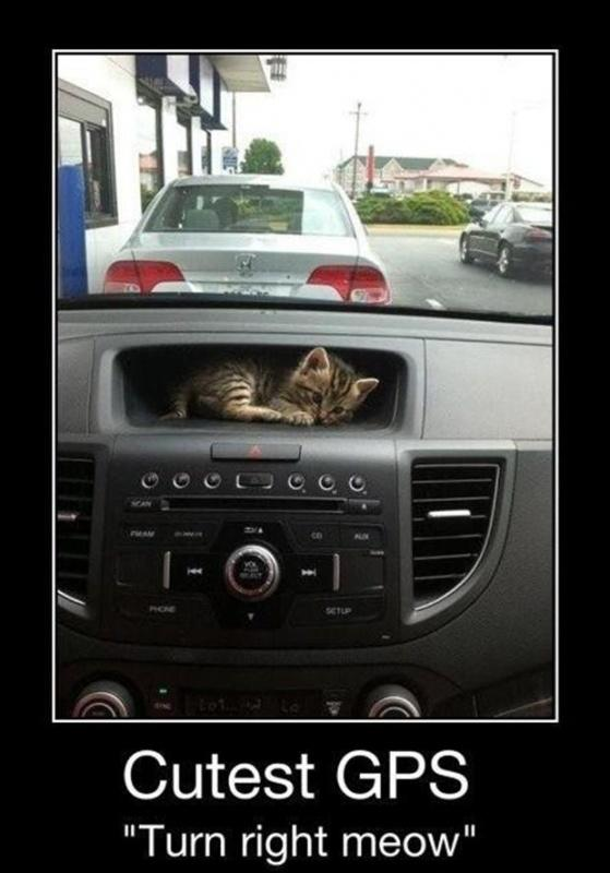 "Cutest GPS ""turn right meow"" Picture Quote #1"