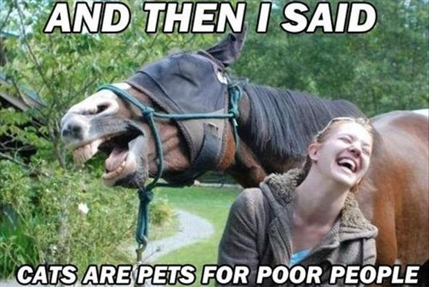 And then I said cats are pets for poor people Picture Quote #1