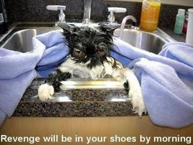 Revenge will be in your shoes by morning Picture Quote #1