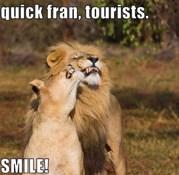 Quick Fran, tourists. Smile Picture Quote #1
