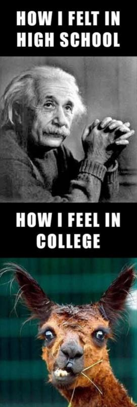 How I felt in high school. How I feel in college Picture Quote #1