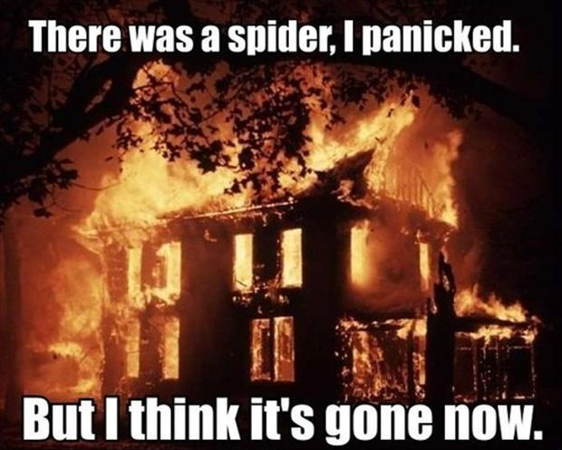 There was a spider, I panicked. But I think it's gone now Picture Quote #1