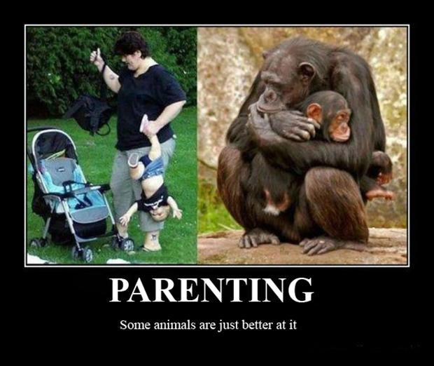 Parenting. Some animals are just better at it Picture Quote #1