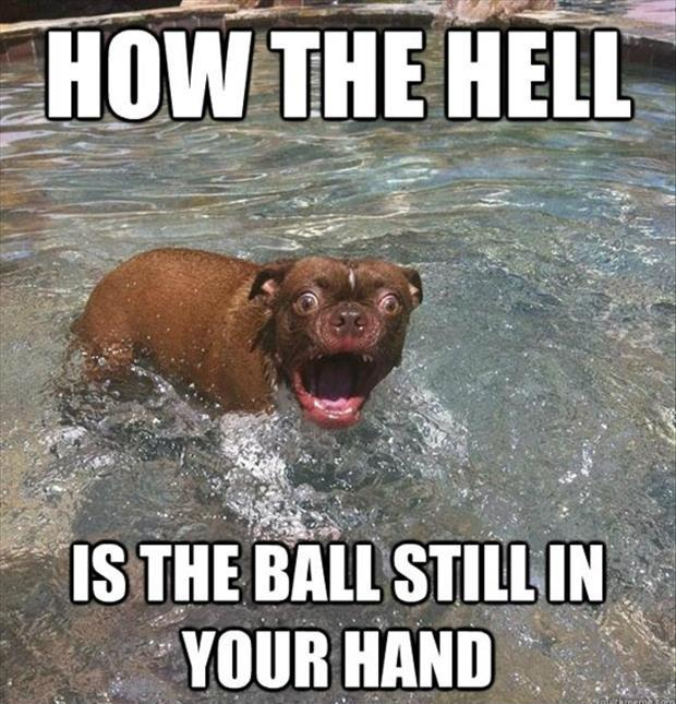 How the hell is the ball still in your hand Picture Quote #1