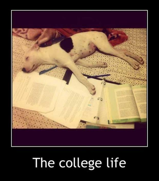 The college life Picture Quote #1
