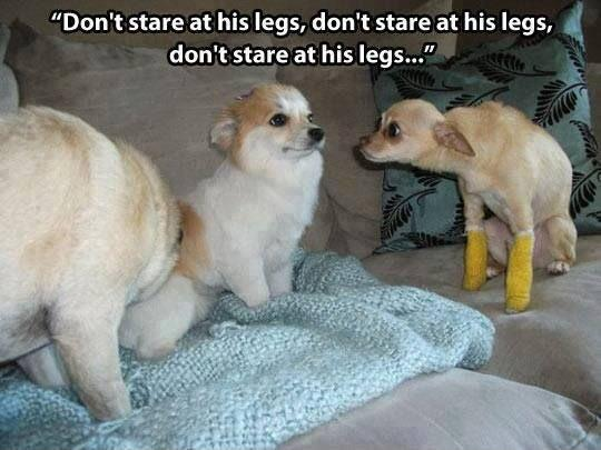 Don't stare at his legs, don't stare at his legs, don't stare at his legs Picture Quote #1