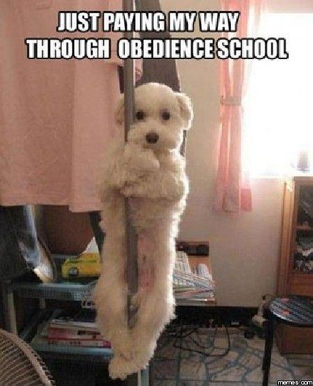 Just paying my way through obedience school Picture Quote #1