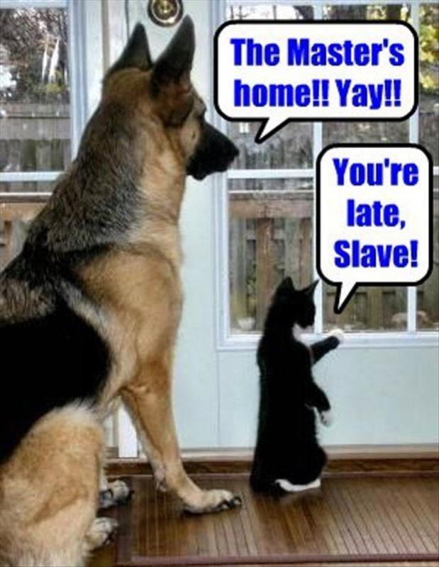 The master's home yay!! You're late slave! Picture Quote #1