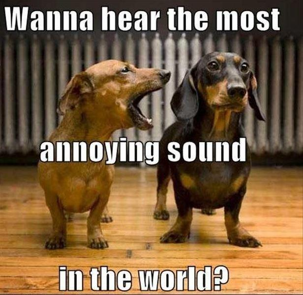 Wanna hear the most annoying sound in the world? Picture Quote #1