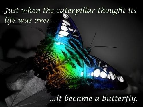 Just when the caterpillar thought its life was over... it became a butterfly Picture Quote #1
