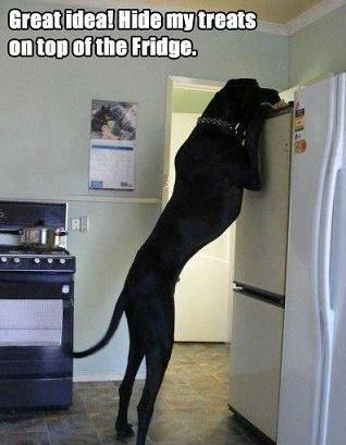 Great idea! Hide my treats on top of the fridge Picture Quote #1