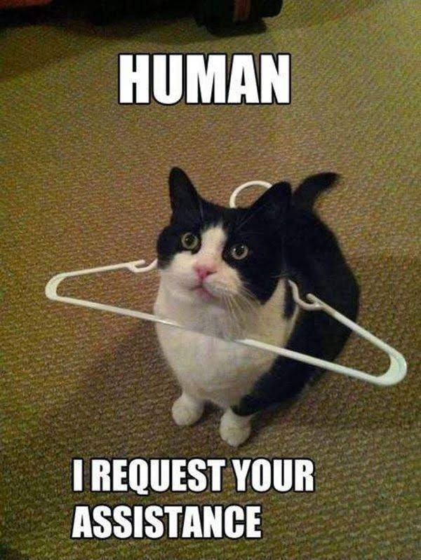 Human I request your assistance Picture Quote #1