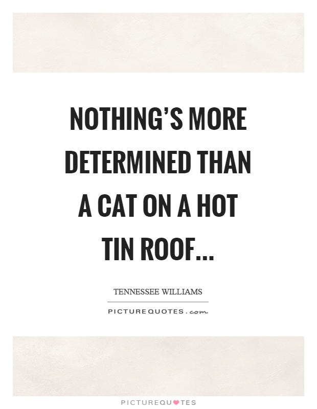 Nothing's more determined than a cat on a hot tin roof Picture Quote #1