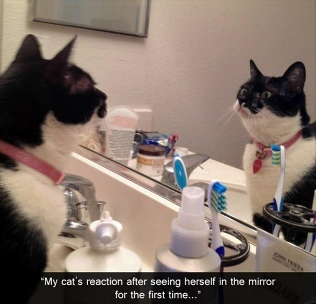 My cat's reaction after seeing herself in the mirror for the first time Picture Quote #1