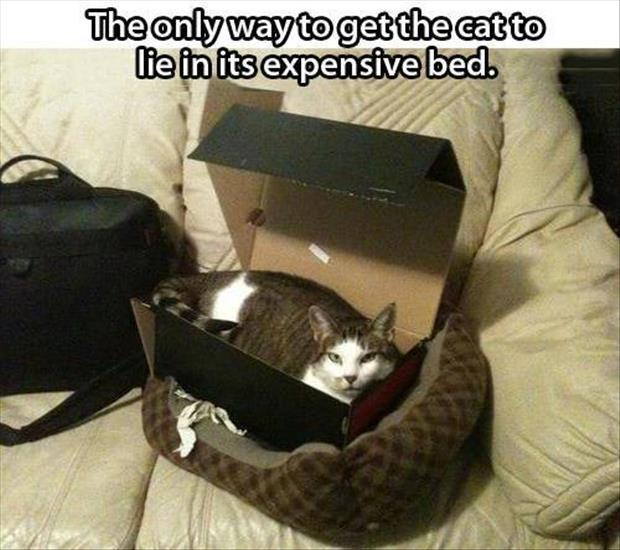 The only way to get the cat to lie in it's expensive bed Picture Quote #1