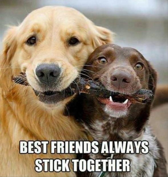 Best friends always stick together Picture Quote #1