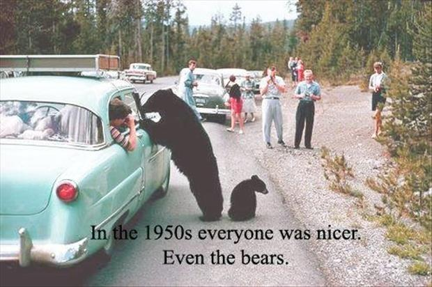 In the 1950's everyone was nicer. Even the bears Picture Quote #1