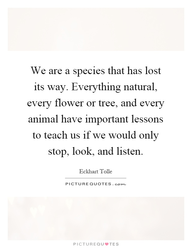 We are a species that has lost its way. Everything natural, every flower or tree, and every animal have important lessons to teach us if we would only stop, look, and listen Picture Quote #1