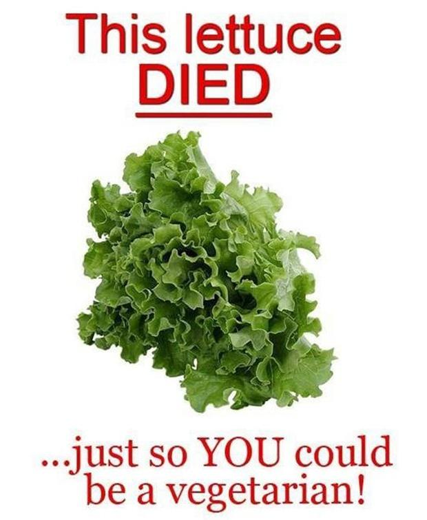 This lettuce died just so YOU could be a vegetarian Picture Quote #1