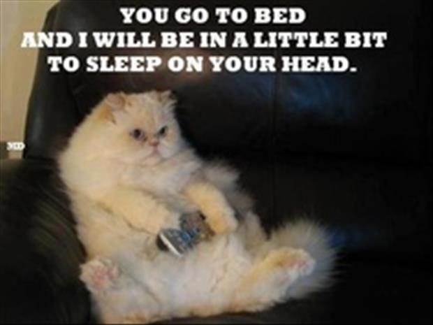 how to make your cat go to sleep