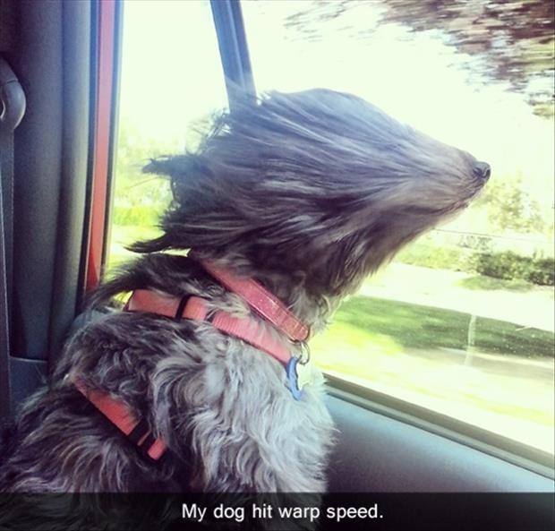 My dog hit warp speed Picture Quote #1