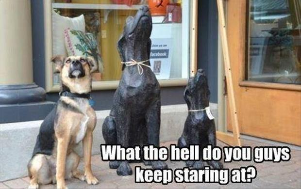 What the hell do you guys keep staring at? Picture Quote #1