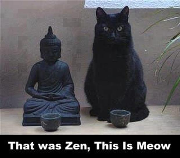 That was Zen, this is meow Picture Quote #1