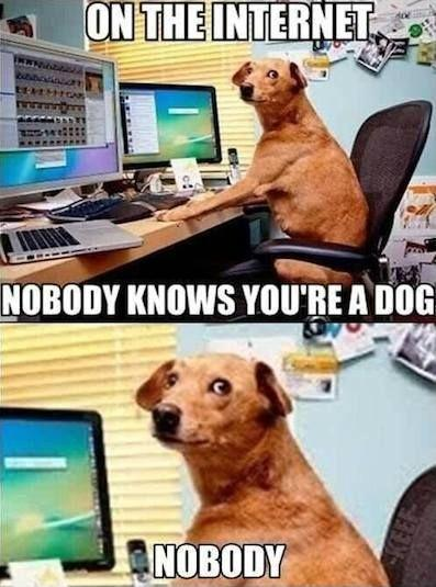 On the Internet, nobody knows you're a dog. Nobody Picture Quote #1