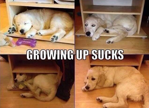 Growing up sucks Picture Quote #1