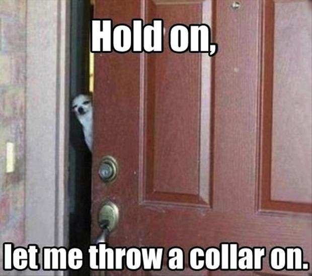 Funny dog quotes funny dog sayings funny dog picture for Door quotes funny