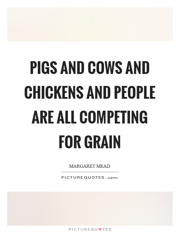 Pigs and cows and chickens and people are all competing for grain Picture Quote #1