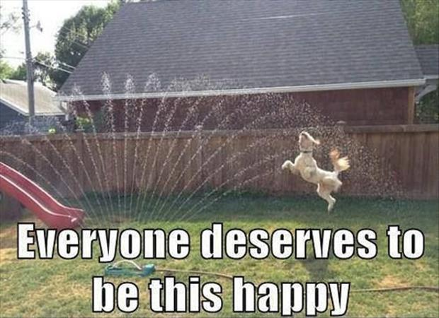 Everyone deserves to be this happy Picture Quote #1