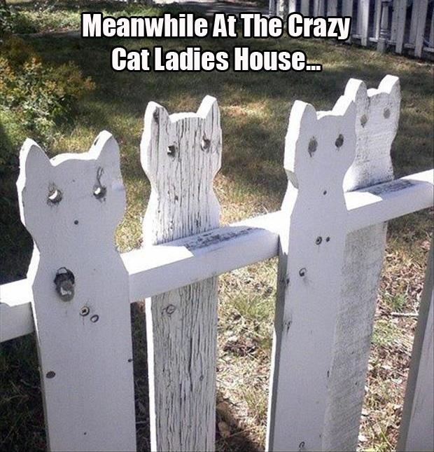 Meanwhile at the crazy cat ladies house Picture Quote #1