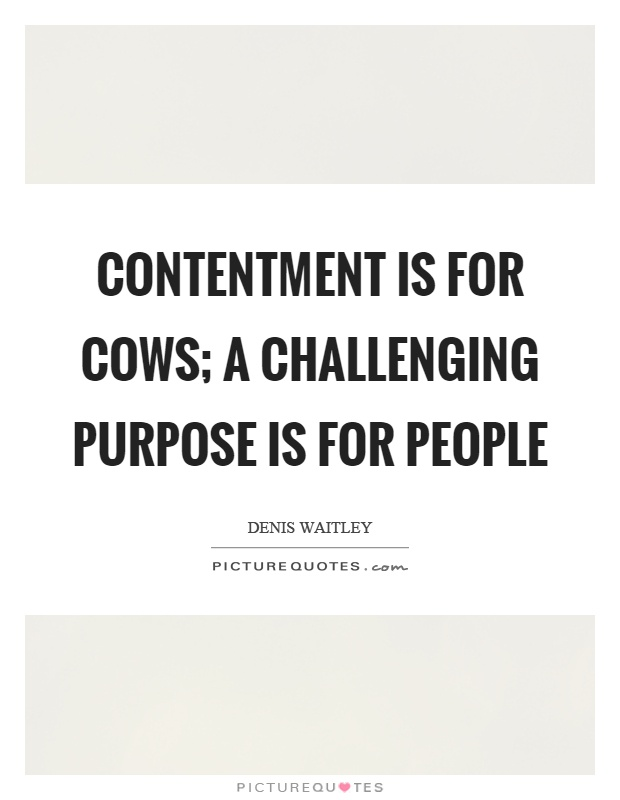 Contentment is for cows; a challenging purpose is for people Picture Quote #1